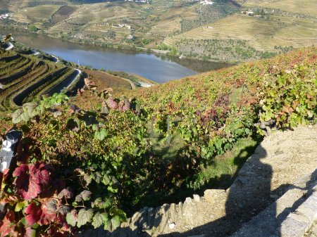 The view from Quinta do Seixo, blessed by both sun and vine.