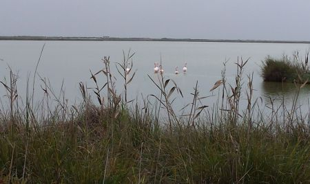 Flamingos pick their way through the mudflats, sharing the road with mullet and sole.